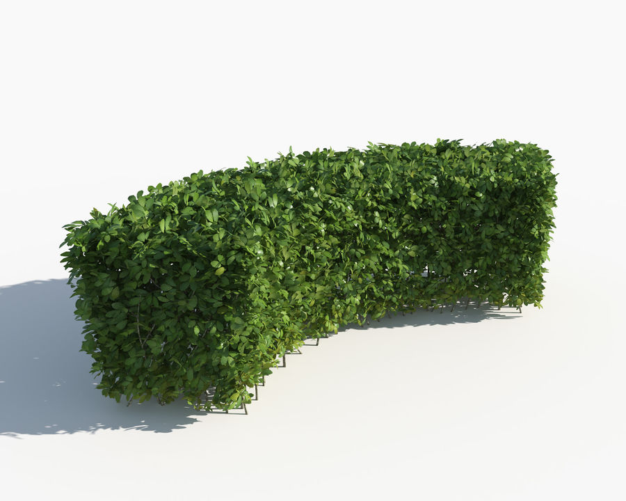 Trimmed Hedges Collection royalty-free 3d model - Preview no. 8