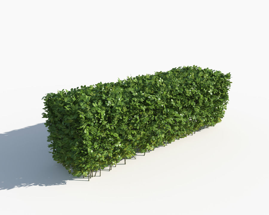 Trimmed Hedges Collection royalty-free 3d model - Preview no. 4