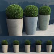 鉢植え7の低木 3d model