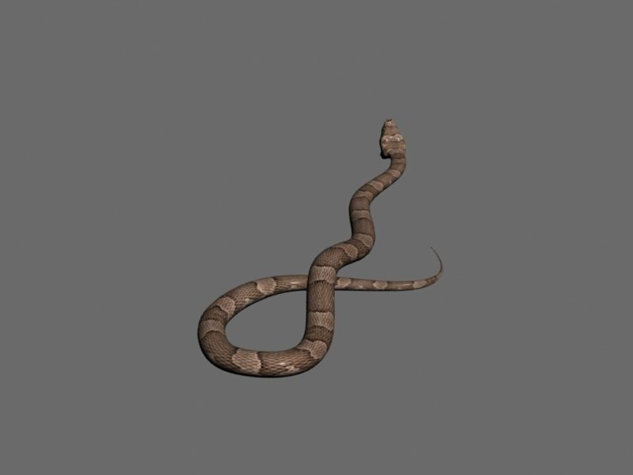 Snake royalty-free 3d model - Preview no. 3