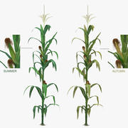 Corn Low-Mid Poly 3d model