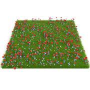 Полевые цветы 3d model