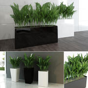Contemporary Plants 3d model