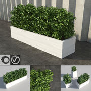 Shrubs in Planters 3d model
