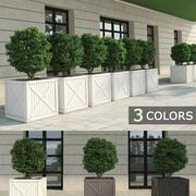 Buissons dans des boîtes 3d model