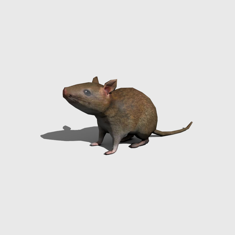 Ratte royalty-free 3d model - Preview no. 1