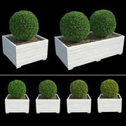 Bushes in Boxes II 3d model