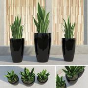Triple Plants! 3d model