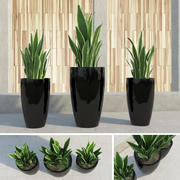 Potrójne rośliny! 3d model
