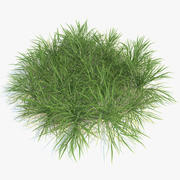 English Ryegrass (Lawn Grass) 3d model
