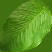 Низкополигональная растение 3d model