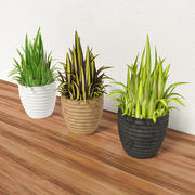 Decorative grass in a pot 3d model
