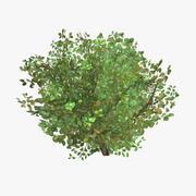 plant_03 3d model