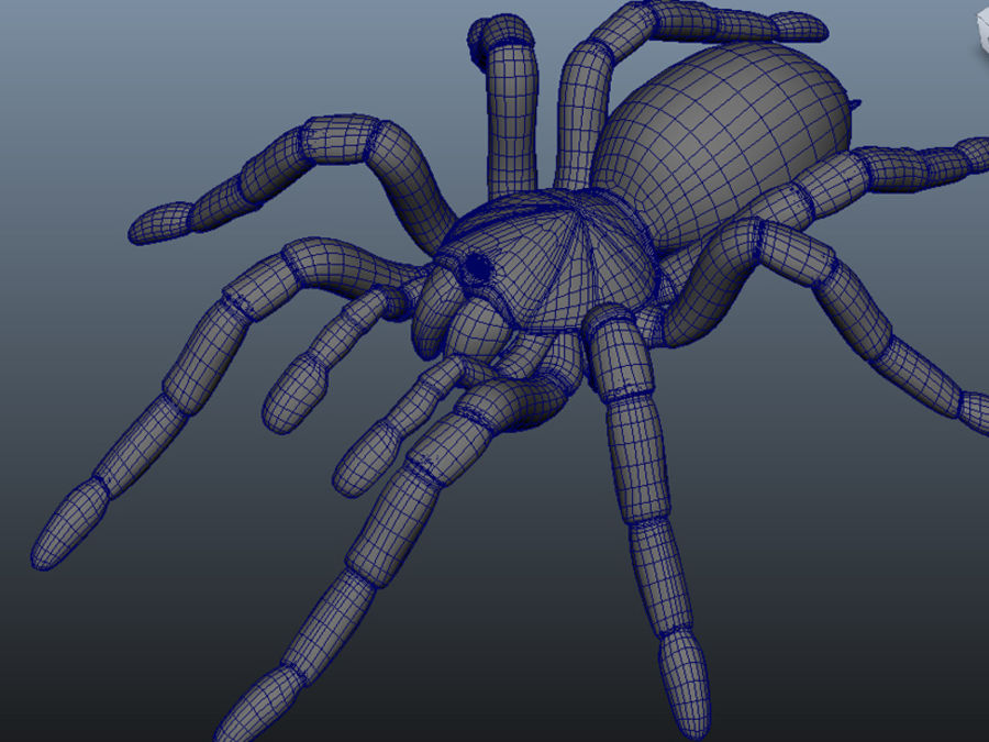 Spider royalty-free 3d model - Preview no. 4