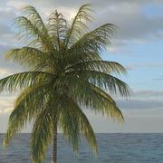 棕榈椰子07 3d model