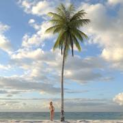 棕榈椰子08 3d model