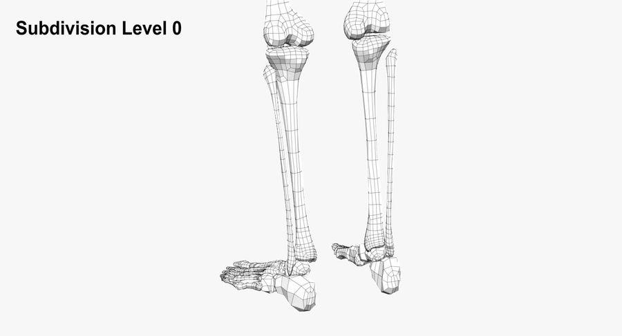 Leg skeleton royalty-free 3d model - Preview no. 15