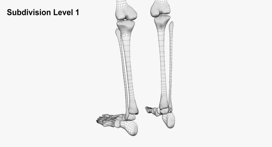 Leg skeleton royalty-free 3d model - Preview no. 16