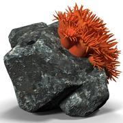 太阳珊瑚 3d model
