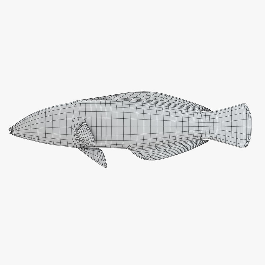 Canary Wrasse royalty-free 3d model - Preview no. 7