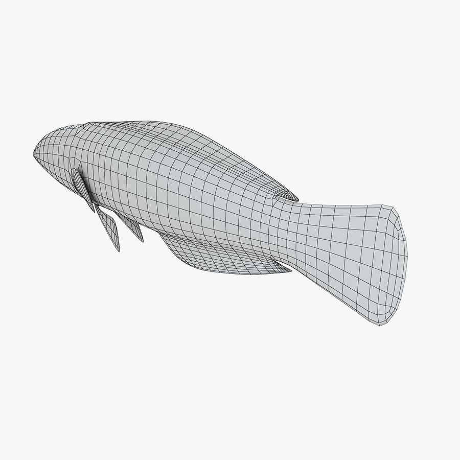 Canary Wrasse royalty-free 3d model - Preview no. 9