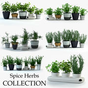 Spice Herbs Collection 3d model