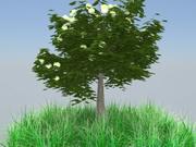 апельсиновое дерево 3d model