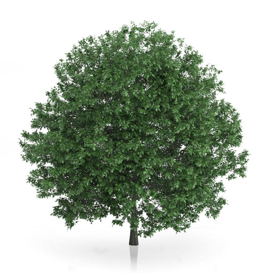 普通角树(Carpinus betulus)10.7m royalty-free 3d model - Preview no. 1
