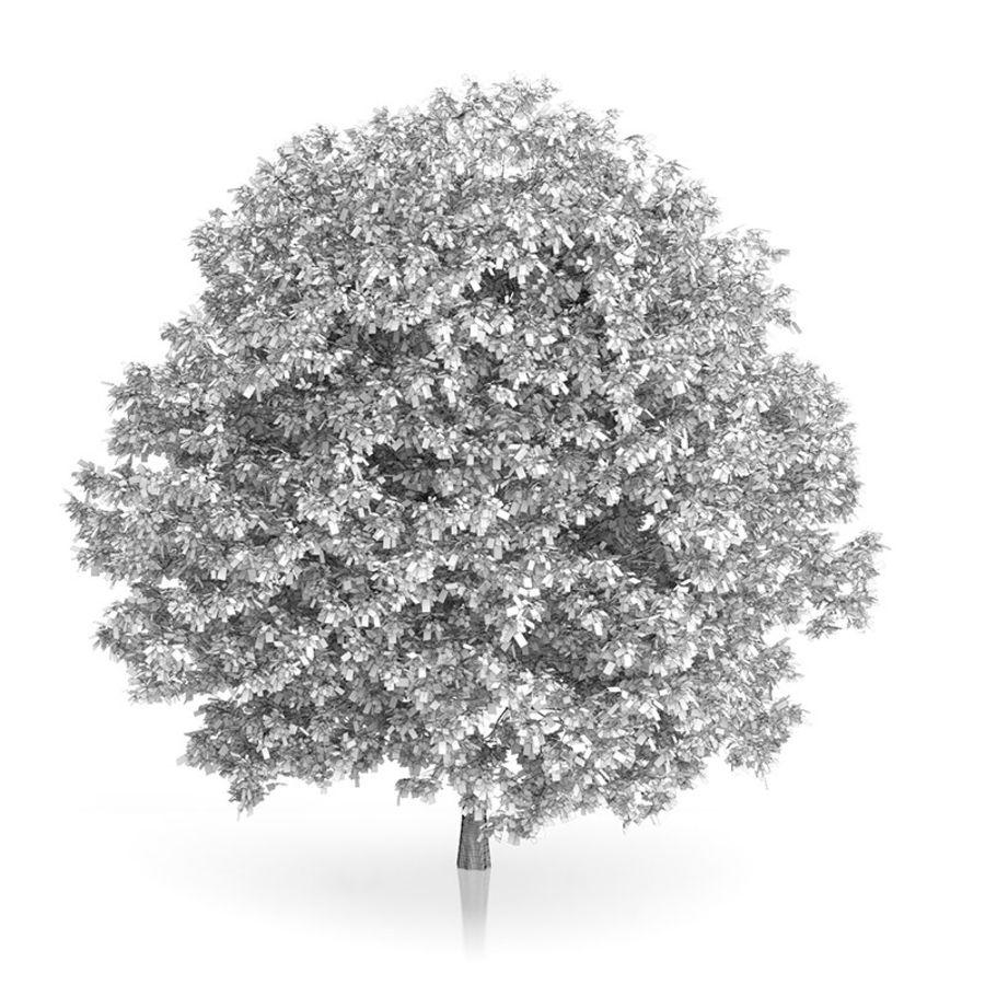 普通角树(Carpinus betulus)10.7m royalty-free 3d model - Preview no. 2