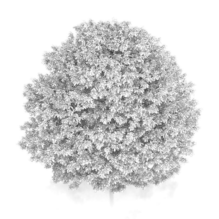 普通角树(Carpinus betulus)10.7m royalty-free 3d model - Preview no. 6