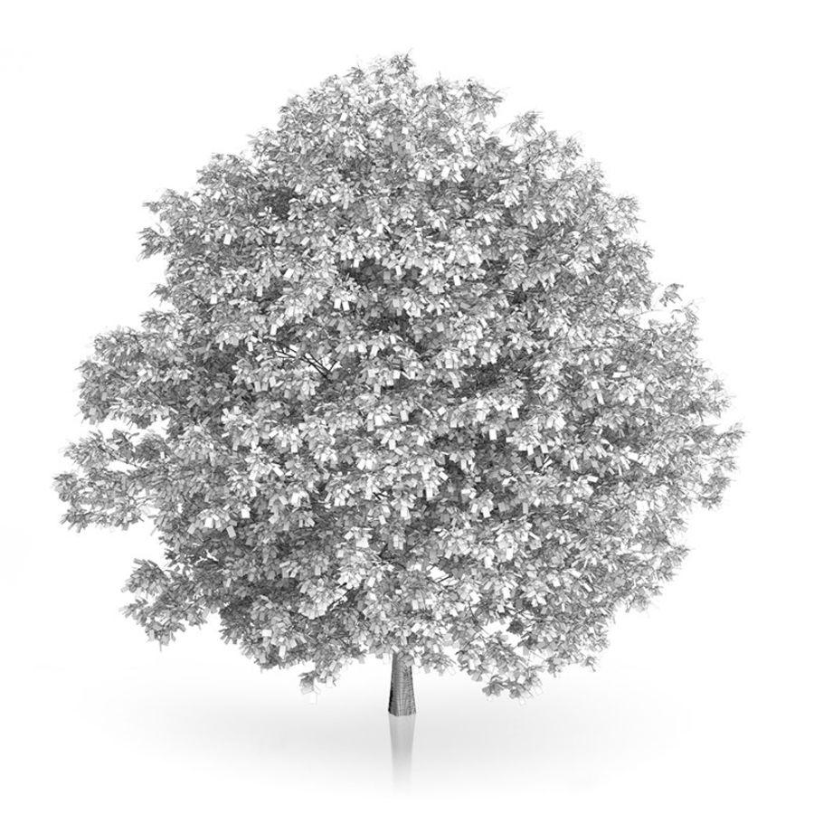 普通角树(Carpinus betulus)10.7m royalty-free 3d model - Preview no. 4