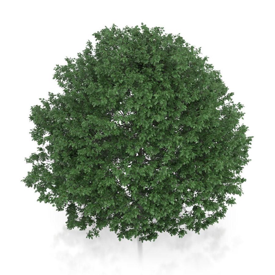普通角树(Carpinus betulus)10.7m royalty-free 3d model - Preview no. 5