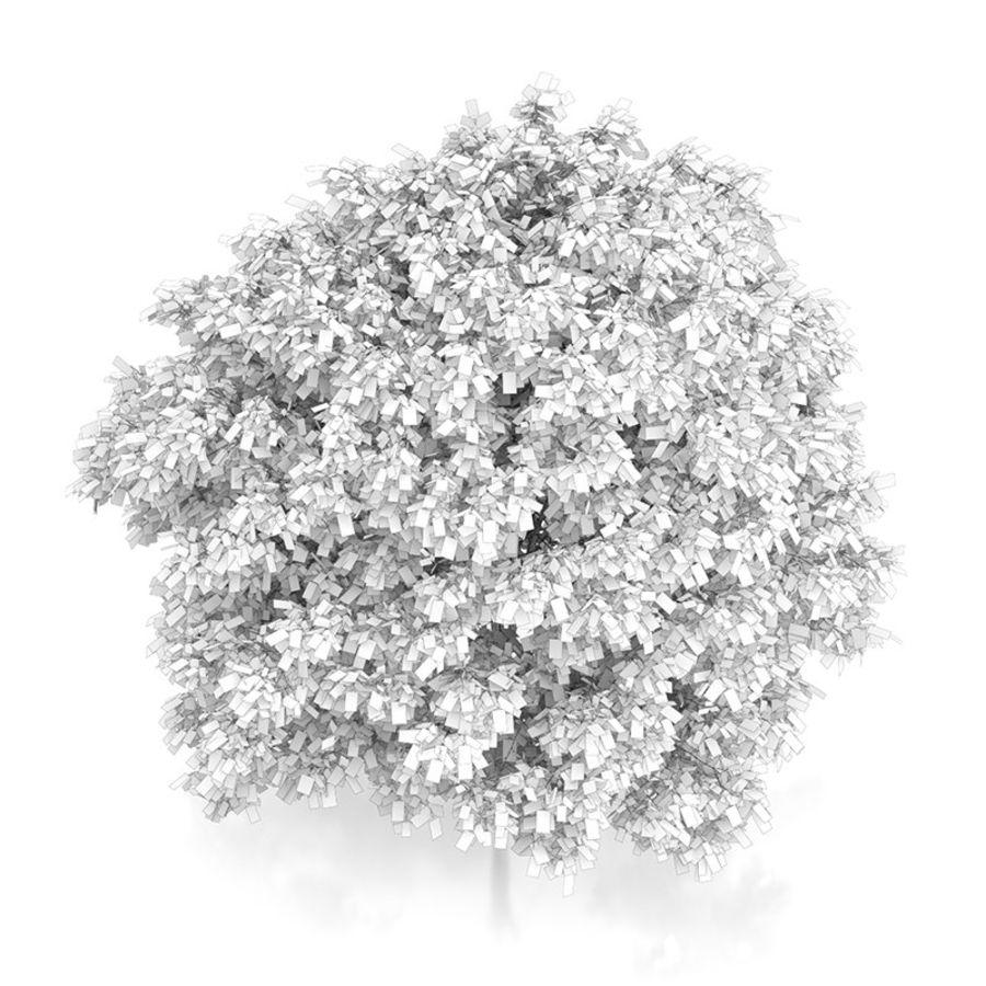 普通角树(Carpinus betulus)4.6m royalty-free 3d model - Preview no. 6