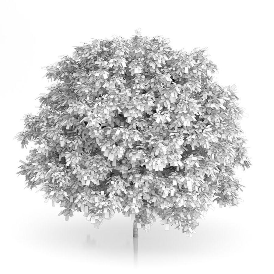 普通角树(Carpinus betulus)4.6m royalty-free 3d model - Preview no. 4