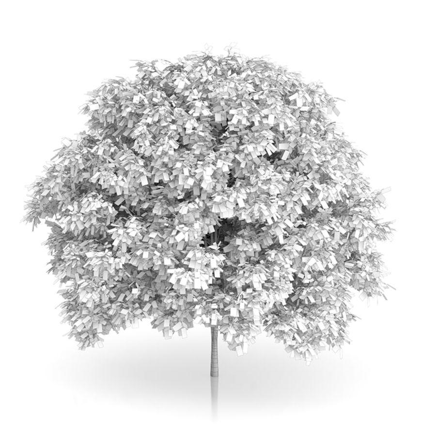 普通角树(Carpinus betulus)4.6m royalty-free 3d model - Preview no. 2