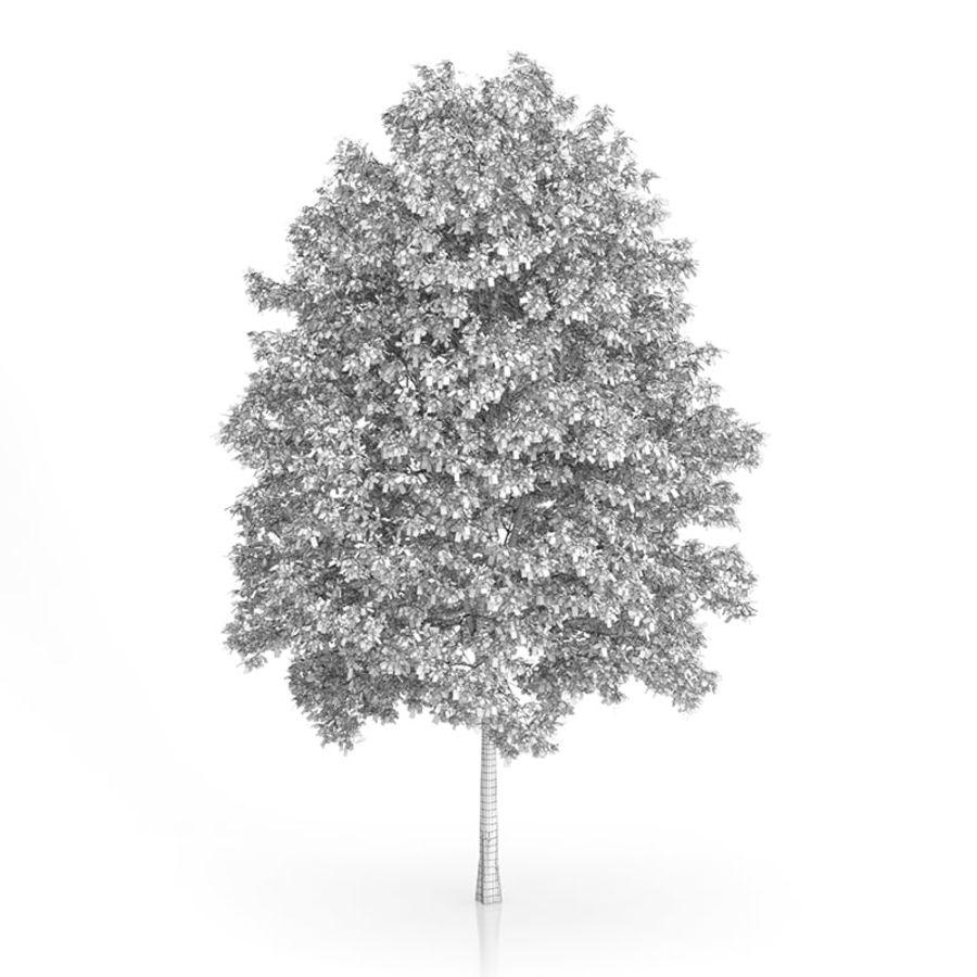 Common Hornbeam Tree (Carpinus betulus) 14.5m royalty-free 3d model - Preview no. 2