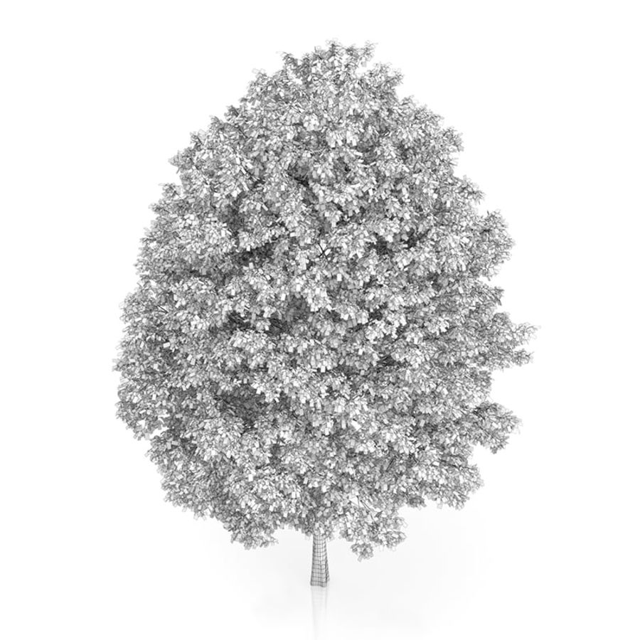 Common Hornbeam Tree (Carpinus betulus) 14.5m royalty-free 3d model - Preview no. 6