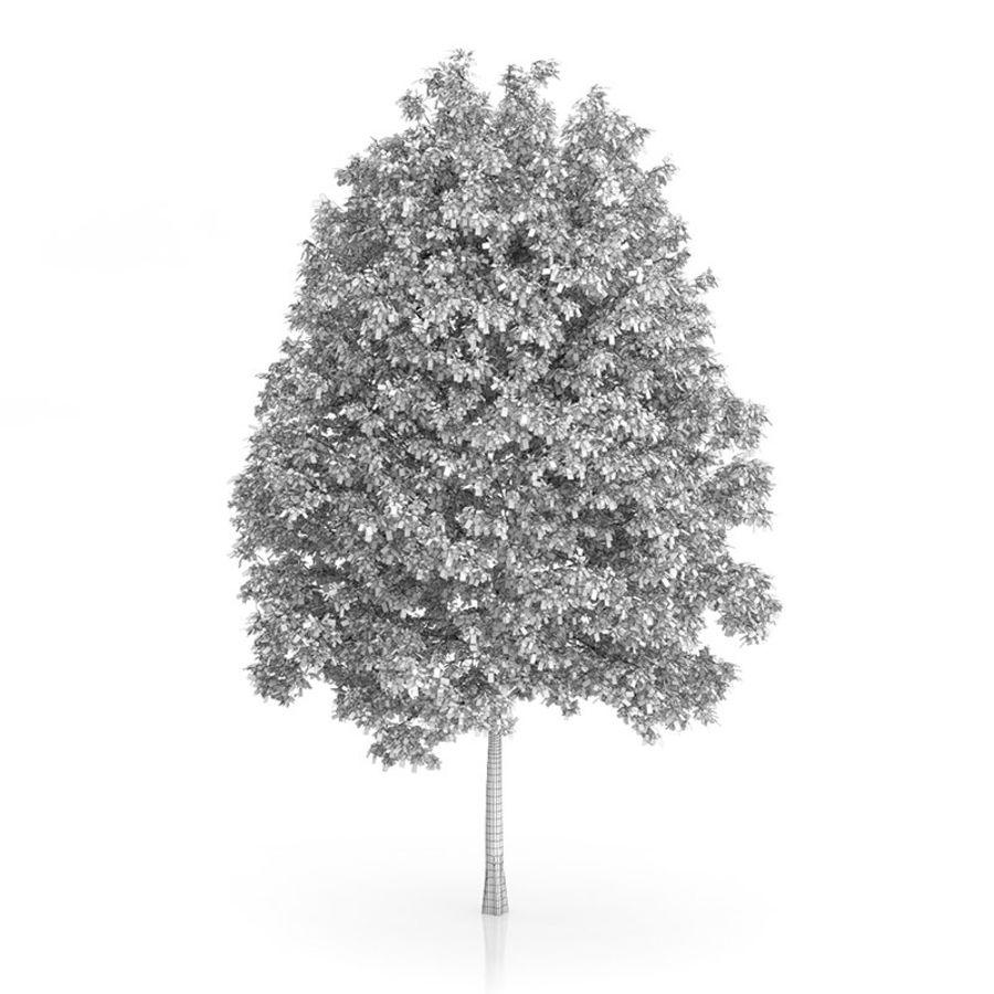 Common Hornbeam Tree (Carpinus betulus) 14.5m royalty-free 3d model - Preview no. 4