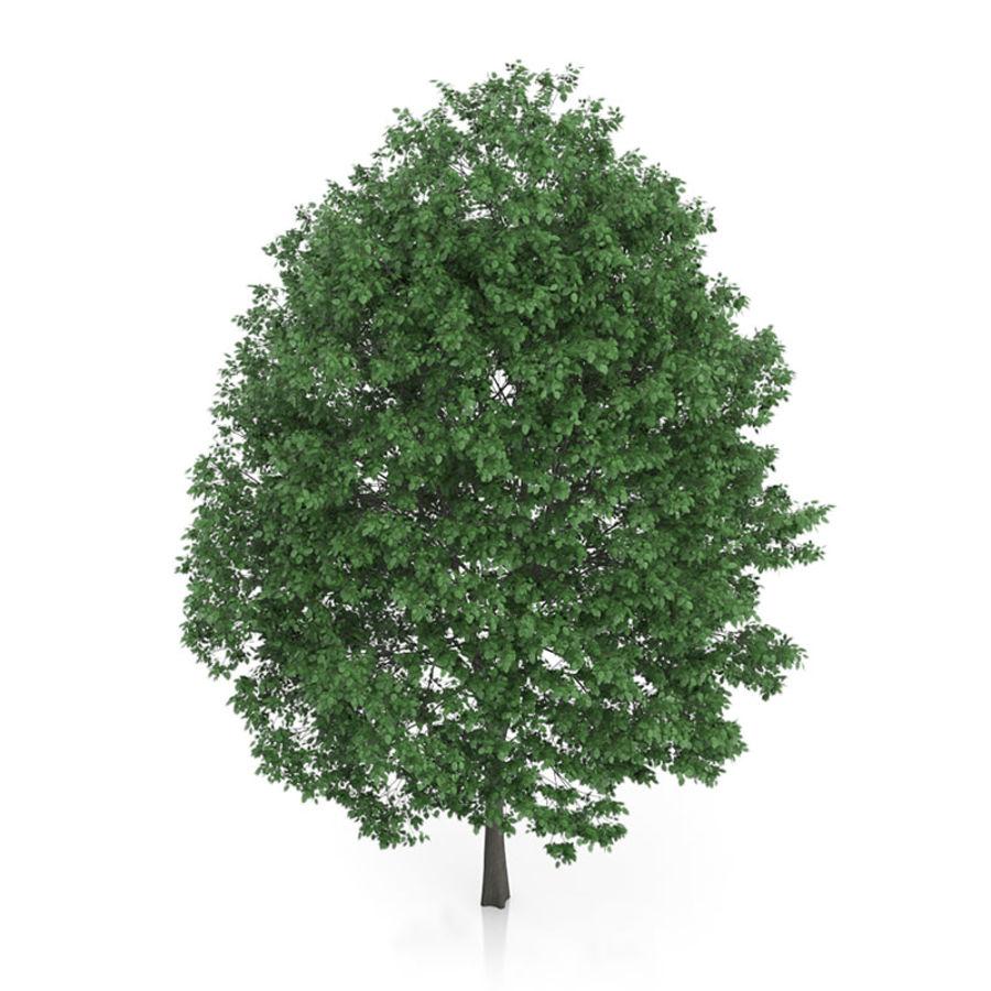 普通角树(Carpinus betulus)14.5m royalty-free 3d model - Preview no. 5