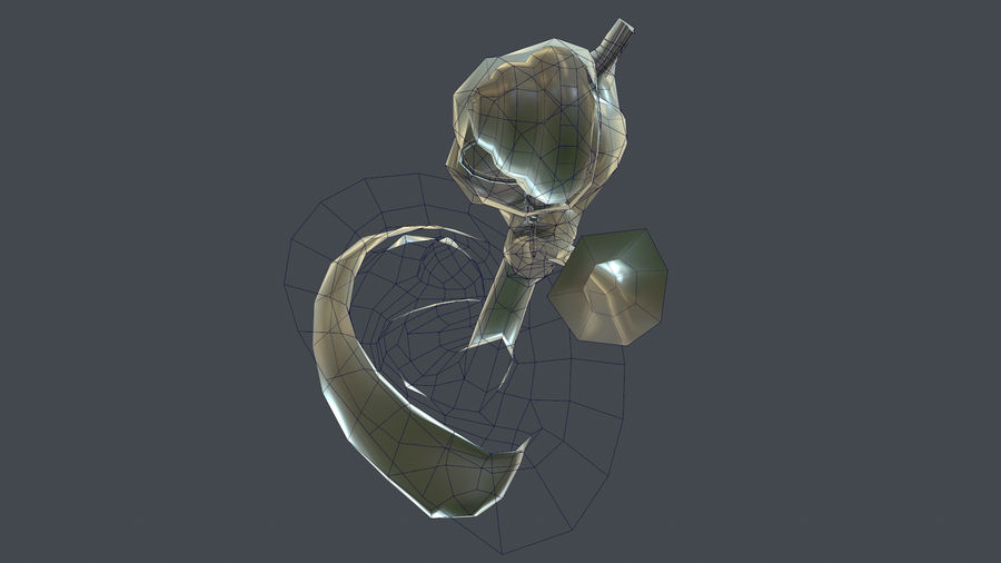 Oor anatomie royalty-free 3d model - Preview no. 30
