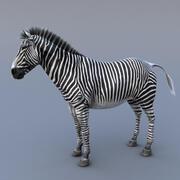 Zebra sürüm2 3d model
