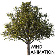 Осеннее дерево с анимацией ветра 3d model
