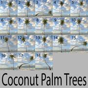 Colección Coconut Palm modelo 3d