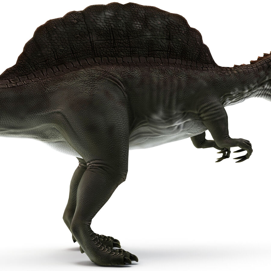 Spinosaurus Rigged royalty-free 3d model - Preview no. 15