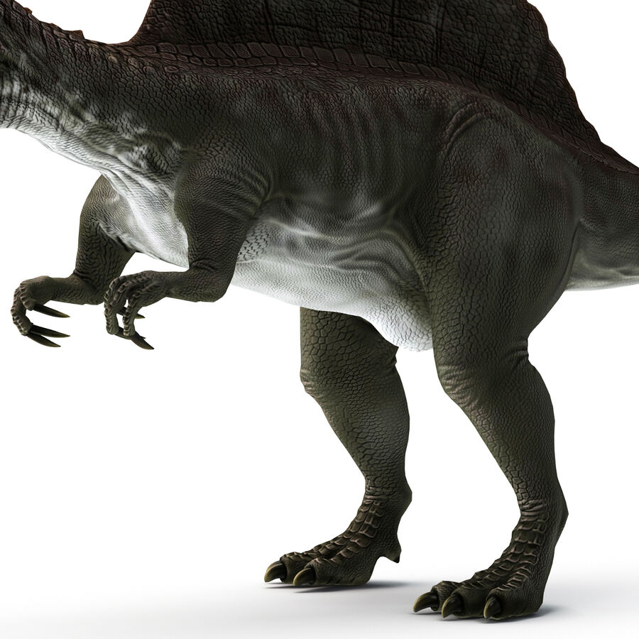 Spinosaurus Rigged royalty-free 3d model - Preview no. 14