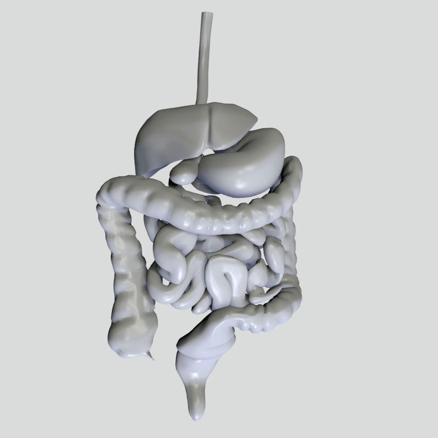 Цвет пищеварительной системы royalty-free 3d model - Preview no. 5