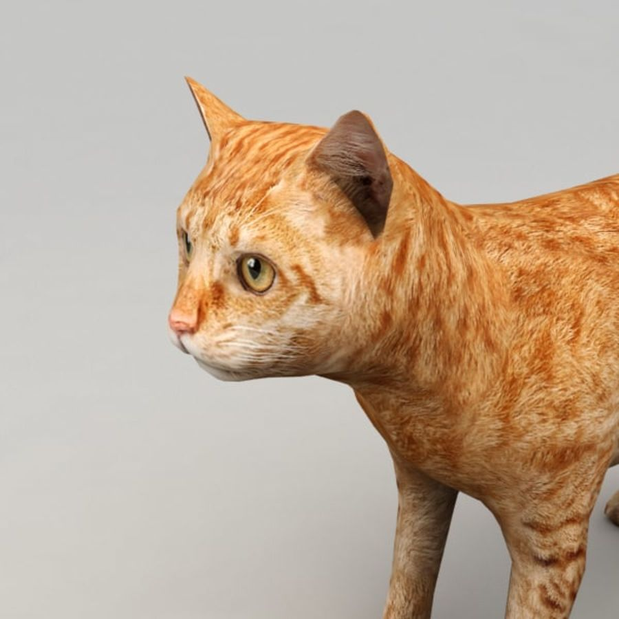 Red cat rigged model royalty-free 3d model - Preview no. 5