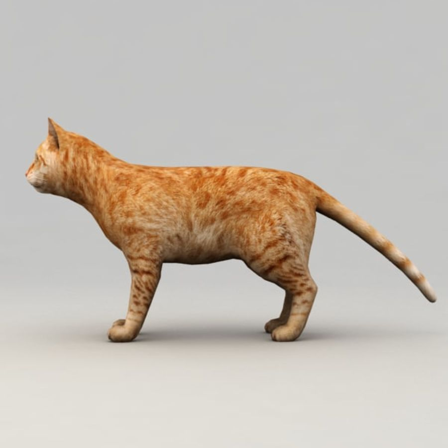 Red cat rigged model royalty-free 3d model - Preview no. 4