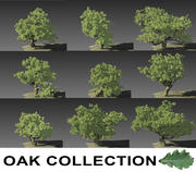 Oak Collection 3d model