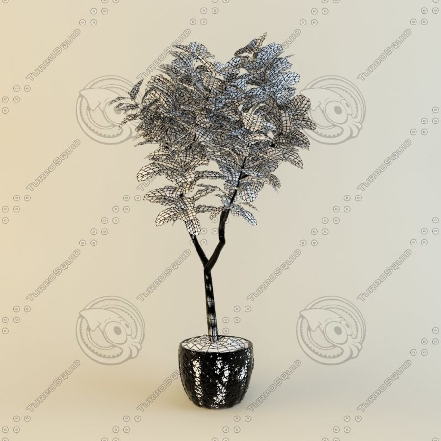 Ficus plant royalty-free 3d model - Preview no. 2